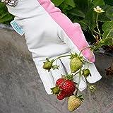 Lederne Gartenhandschuhe für Damen (mittelgroß / kleine Größe) - von Viridescent. Frauen lieben diese rosa, femininen, eng anliegenden Handschuhe. Schützend, bequem und langlebig (sogar sicher für das Zurückschneiden von Rosen). Die beste Geschenkidee für jede Gärtnerin. Kaufen sie es heute im Schlussverkauf! Vergleich