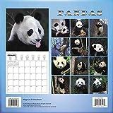 Image de Pandas Calendrier Calendar 2016