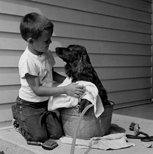 Boy washing dog in bowl Poster Drucken (45,72 x 60,96 cm) -