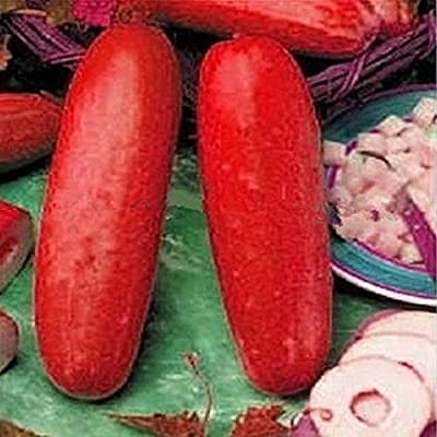 Inovey 30 Stücke Rote Gurke Samen Obst Gemüse Samen Seltene Pflanze Bonsai Hausgarten von Inovey bei Du und dein Garten