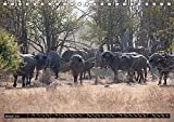"""Sambia """"Das wirkliche Afrika"""" (Tischkalender 2019 DIN A5 quer): North Luangwa ein wildes Naturerlebnis. (Monatskalender, 14 Seiten ) (CALVENDO Natur) - Udo Quentin"""