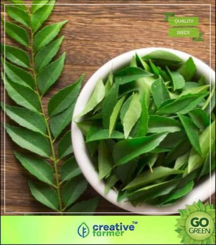 Pinkdose Curry Baumsamen Geeignet für Innen Seed Growing