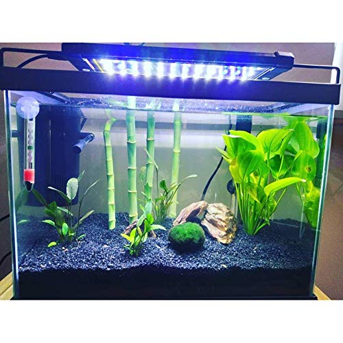 Nicrew Aquarium LED Beleuchtung, LED Aquarien-Aufsetzleuchte Passend für Aquarien 28 bis 50 cm, 6W - 6