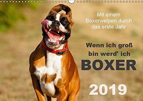 Wenn ich groß bin werd' ich Boxer (Wandkalender 2019 DIN A3 quer): Mit einem Boxerwelpen durch das erste Jahr - Monatskalender 2015 (Monatskalender, 14 Seiten ) (CALVENDO Tiere)
