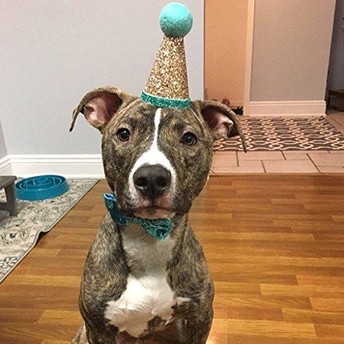 Vektenxi 1 Satz Pet Crown Hut mit Bogen-Knoten für Hund Welpe Katze Kostüm Geburtstag Ornament Kopf tragen langlebig und praktisch (Kopf Tragen Kostüm)