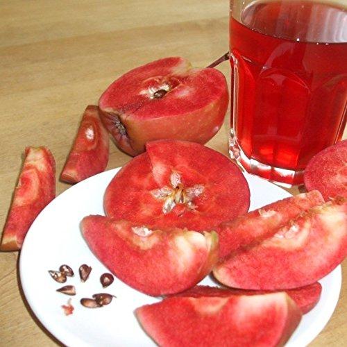 TOM-GARTEN, Obstpflanzen, Apfel 'Red Maggy', 1 Pflanze, ca. 120 cm Höhe im 22 cm Topf mit 5 Litern Volumen, hoher Vitamin C-Gehalt