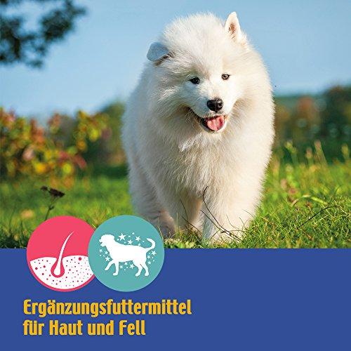 Nutrizeutikum Derm-Caps, 50g gegen zu trockener, schuppiger und juckender Haut sowie stumpfem, glanzlosem Fell bis hin zu Haarausfall für den Hund - 4