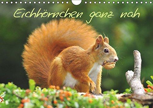 Eichhörnchen ganz nah (Wandkalender 2019 DIN A4 quer): Kleine Nager auf Futtersuche (Monatskalender, 14 Seiten ) (CALVENDO Tiere)