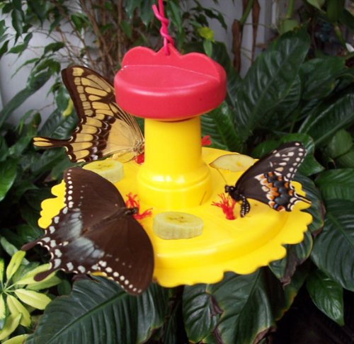 Songbird Essentials 2 Stück Schmetterling Feeder -