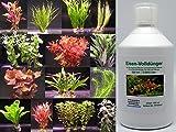 10 Bunde Aquarium-Pflanzen + 1 Flasche Eisen-Volldünger für 12 Monate - Set für 100 Liter Aquarium, Sortiment Wasserpflanzen für Vorne, Mitte und Hinten