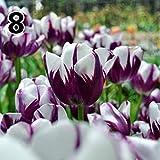 Ultrey Samenshop - 50 stück Tulpen Samen Bunte Blumensamen Bonsai Tulpen Gartenpflanzen Gartenblumen Samen Winterhart Mehrjährig für Garten Balkon/Terrasse
