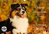 Bekannt wie ein bunter Hund. Australian Shepherd (Wandkalender 2020 DIN A3 quer): Der Australian Shepherd, auch liebevoll Aussie genannt auf 13 ... 14 Seiten ) (CALVENDO Tiere)