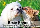 Beste Freunde - Bezaubernde Tierfreundschaften (Wandkalender 2016 DIN A4 quer): Besondere Tierfreundschaften in wunderschönen Bildern (Monatskalender, 14 Seiten ) (CALVENDO Tiere)