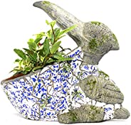 Paudhe Se Yaari Toucan Bird Planter Pot (Grey & Wh