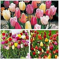 Humphreys Garden® Triumph Tulip Mixed Bulbs Size: 9 1/2-10 (50)