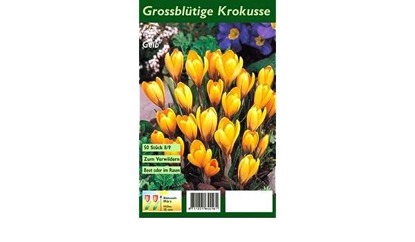 Krokusse Zum Verwildern grossblütige krokusse gelb 50 stück amazon de garten