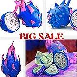 Fash Lady 200 Teile/Beutel Seltene Mix Farben Pitaya Samen Drachenfrucht Samen Garten Bonsai Obst-Baum-samen Köstlichen Tropischen Obst Lebensmittel Topf Pflaume