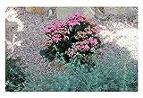 iRocket - Tappeto per Interni – Un Giorno Verde a Edmonton Garden 02 (60 x 40 cm)