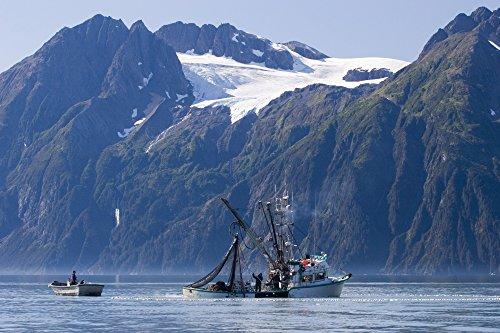 The Poster Corp Scott Dickerson/Design Pics - Commercial Fishing Boat *Malamute Kid* Seining for Silver Salmon Port Valdez Prince William Sound Alaska Photo Print (86,36 x 55,88 cm) (William Dickerson)