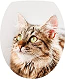 Sticker Autocollant Abattant WC Chat 35x42cm SAWC0327