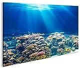 islandburner Bild Bilder auf Leinwand Unterwasser Tauchen Korallen Meerwasser 1p XXL Poster Leinwandbild Wandbild Dekoartikel Wohnzimmer Marke