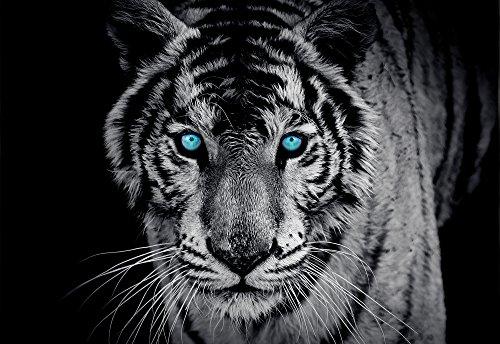 olimpia-design-fototapete-photomural-tiger-1-stuck-153p8