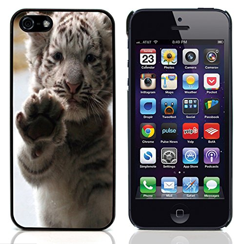 Graphic4You Baby Cats Love Tier Design Harte Hülle Case Tasche Schutzhülle für Apple iPhone 5 und 5S Design #5