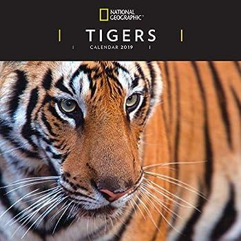 Calendario Tiger 2019.Tigers Tiger 2019 Kalendar National Geographic Offizielles