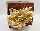 Limonenpilz Pilzzuchtbox Bio