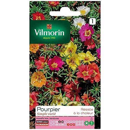 Vilmorin - Sachet graines Pourpier simple varié