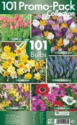 Greenbrokers Ltd Blumenzwiebel-Set, 6 verschiedene Frühlingsblumen-Sorten, Packung mit 101 Zwiebeln von Greenbrokers Limited - Du und dein Garten