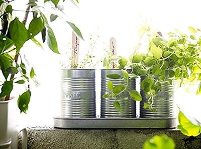 IKEA FRÖER Anzucht-Set 1 Schale; 3 Töpfe; Kräuter von IKEA bei Du und dein Garten
