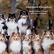 Shetland Sheepdog: Engel ohne Flügel auf vier Pfoten