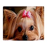 Best Yorkie Beds - CafePress - Yorkie L Print - Soft Fleece Review