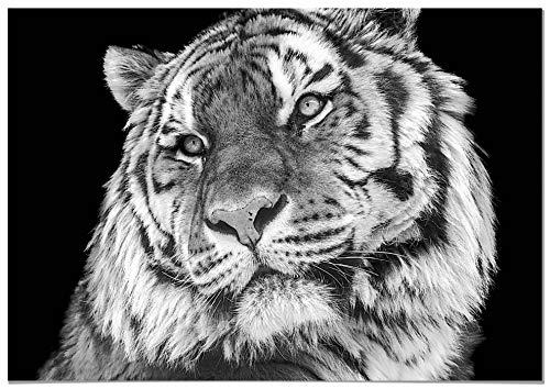 Panorama® Poster Tigre 50x35cm | Impreso Papel 250gr