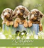 Welpen 2019 - Puppies - Hunde - Dogs - Postkartenkalender (15 x 16) - aufstellbar