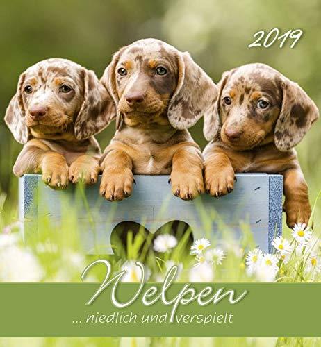 Welpen 2019 - Postkartenkalender