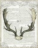 Feelingathome-Leinwand-Bild-Regal-Antlers-auf-Zeitungspapier-II-cm67x53-Kunstdruck-auf-Leinwand