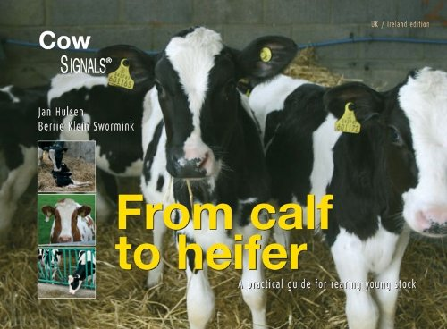 From calf to heifer: a practical guide for rearing young stock (Cowsignals)