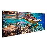 islandburner Bild Bilder auf Leinwand Hawksbill Schildkröte - Eretmochelys imbricata schwimmt unter Wasser. Wandbild, Poster, Leinwandbild EOG