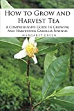 How to Grow and Harvest Tea: A Comprehensive Guide In Growing And Harvesting Camellia Sinensis (Growing And Using Herbs Book 1)