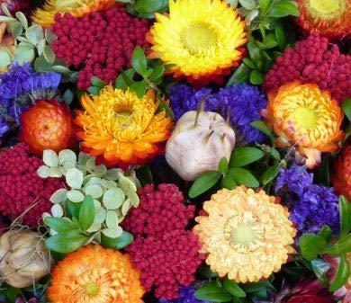 MEIGUISHA Gartensamen - Raritäten Duftet Strohblumen gefüllte Mischung Blumensamen Saatgut Pflanze winterhart mehrjährig für Balkon aud Terrasse (50)