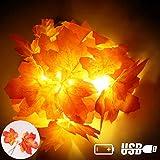 XIYUNTE Lichterketten Künstliches Ahornblatt - 6.6FT/10 LED Lichterketten Saisonale Deko USB & 3*AA Batteriebetrieben Herbst Maple Leave String Light Dekoration für Garten, Weihnachten