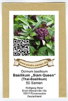 """Ocimum basilicum - Thai-Basilikum """"Siam-Queen"""" - 50 Samen von exotic-samen bei Du und dein Garten"""