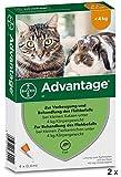 Advantage Spar-Set 2 x (4 x 0,4 ml) Zur Vorbeugung und Behandlung des Flohbefalls bei kleinen Katzen und Zierkaninchen unter 4 kg Körpergewicht