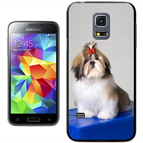 Hunde Hartschale für Samsung Modelle, Shih Tzu Dog Sitting On A Box, Samsung Galaxy S5 Mini (SM-G800F/H) -