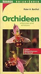 Orchideen erkennen und schützen (Naturführer)