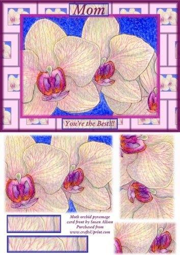 falena-orchidea-della-parte-anteriore-per-mamma-di-susan-alison