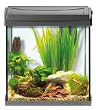 Tetra AquaArt Discovery Line LED Aquarium-Komplett-Set 30 Liter anthrazit (inklusive LED-Beleuchtung, Tag- und Nachtlichtschaltung und EasyCrystal Innenfilter, ideal für Krebse und Garnelen) - 11