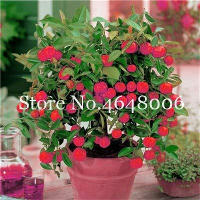 Bloom Green Co. 20 Stück Zitrone Bonsai New DrawF Baum Bio-Obst für Hausgarten liefert einfache Exotic Citrus Bonsai Topfbaum Fresh Anlage wachsen: 13 -